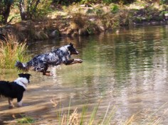 Fetching a stick in water again: part 2