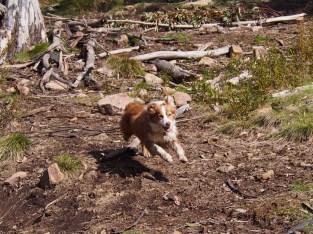 Some Mal full-speed running!