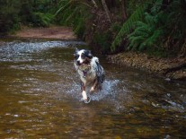 Creek stick fetching.