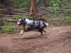 More full speed running!!!