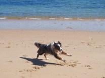 Happy running Lumen dog...