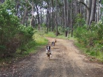 Happy running dogs!!