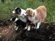 Dogs on a log!