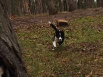 Puppy running!