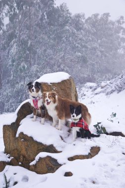 Dogs on snowy rocks.
