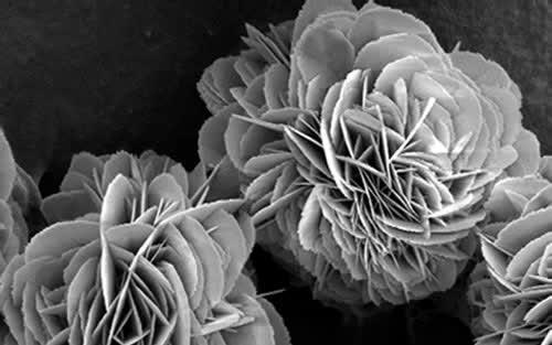 Biyomedikal Uygulamalar İçin Süperhidrofobik 'Nanoflower'
