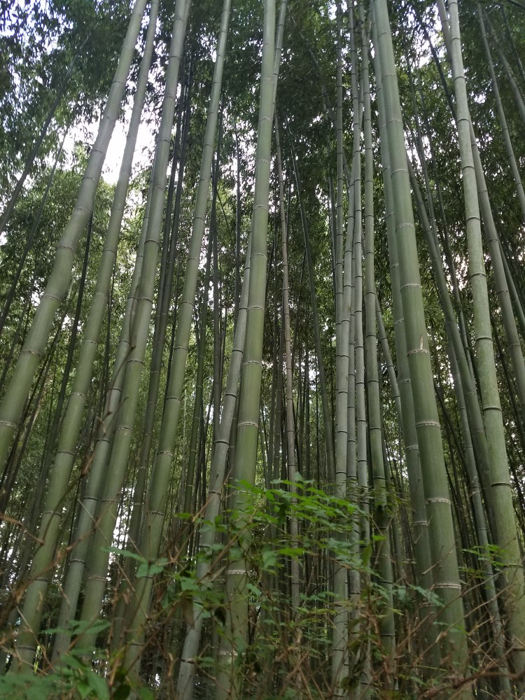 Bamboo Forest 3