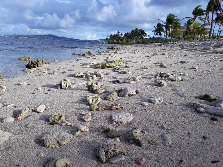 Close up of shells on a beach in the Virgin Islands
