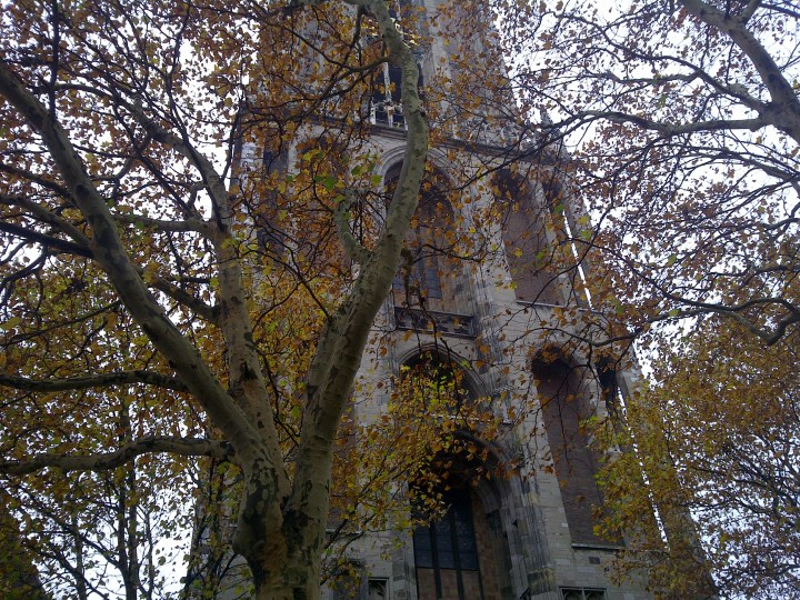 Utrecht church behind autumn leaves