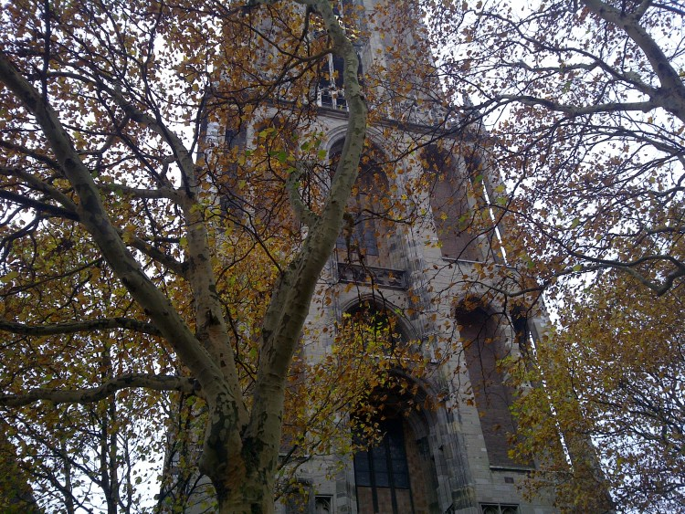 Utrecht church behind autumn leaves