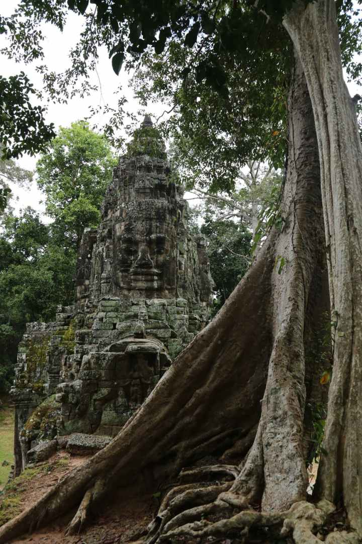 temple near aged tree trunk in cambodia
