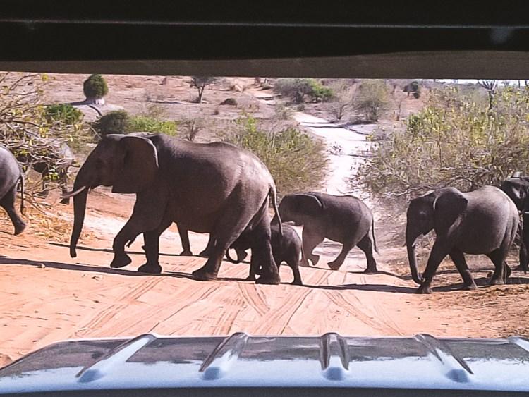 Chobe National Park, Elephants