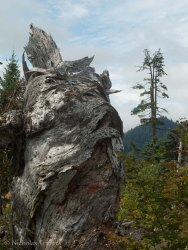 shrivelled old ent