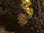 Elm with leaf