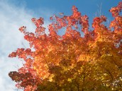 The Red of Fall