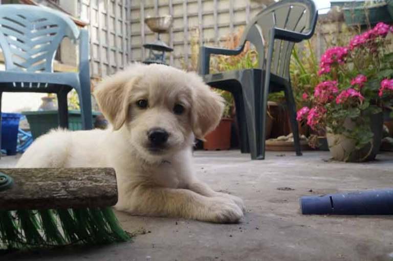 How to teach a dog fetch