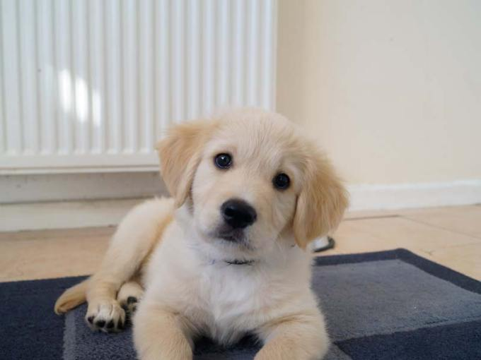 Ted the puppy's blog about his video