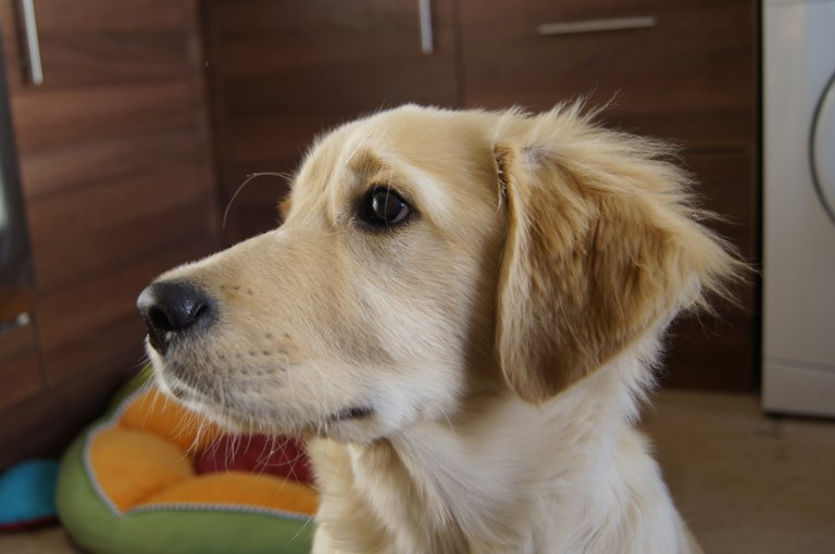 Help your puppy not to ne anxious