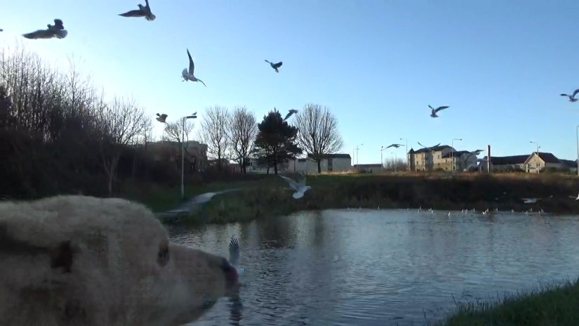 Socialise your puppy with the birds