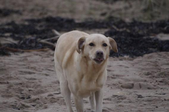 Ted at Gullen Beach22