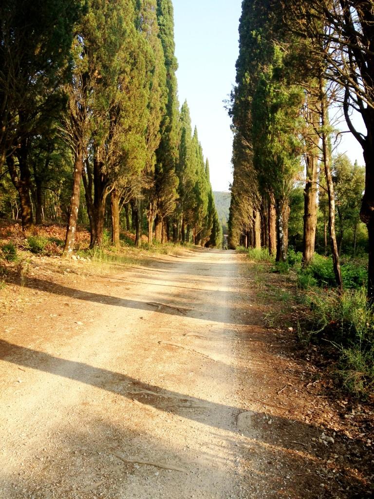 early morning trek