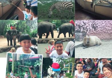 【曼谷華欣】2018親子自由|Safari World野生動物園|聖托里尼樂園|恰圖恰假日市集|火車市集