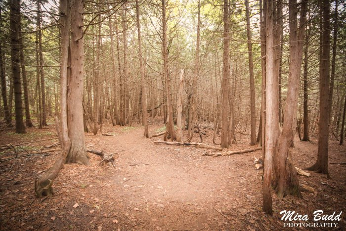 Ontario Hiking Trails, Grand River Elora, Elora Gorge,