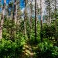 Alton Pinnacle Loop Trail