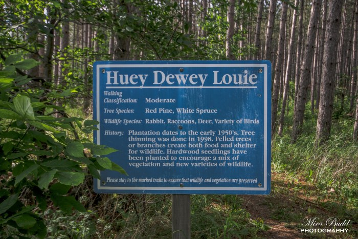Huey Dewey Louie Trail, Hiking Trails in Ontario, Caledon Hiking, Beautiful Places to see in Ontario, Best hiking Trails in Ontario,
