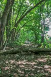 Things to see in Caledon East, Trans Canada Trail, Caledon Trail, Ontario Hiking Trails,