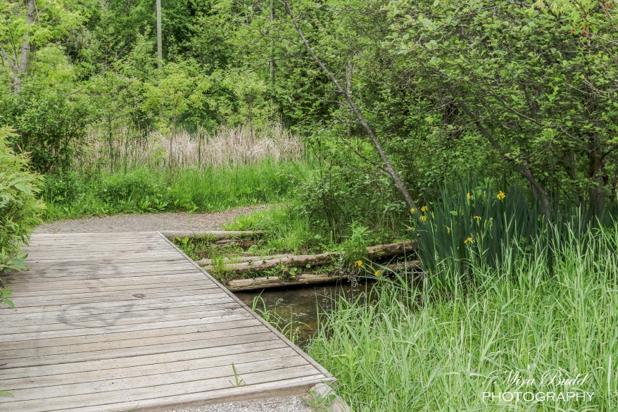 Hiking trails in Ontario, Ontario Attraction, Caledon hiking, Best hiking trails,