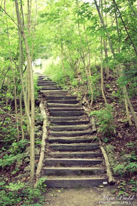 The Bruce Trail Hiking Hamilton Ontario