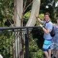 Tamborine Rainforest Skywalk,