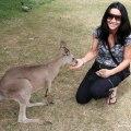 Things to see Near Brisbane, Things to do in Brisbane, Things to see in Queensland, Queensland Zoos, Places to see Kangaroos in Australia, Koalas in Brisbane Queensland, Beautiful places in Australia, Australian Zoos, Lone Pine Koala Sanctuary,