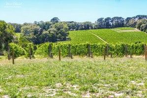 T'Gallant Winery, London Bridge Ocean Beach, Dromana Victoria Australia, things to See in Australia, Places to Visit in Victoria Australia, Melbourne Beaches, Beautiful Beaches Australia,