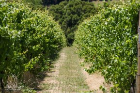 T'Gallant Winery, London Bridge Ocean Beach, Dromana Victoria Australia, things to See in Australia, Places to Visit in Victoria Australia, Melbourne Beaches, Beautiful Beaches Australia, Great Restaurants in Victoria,