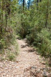 Murrindindi River Walk, Hiking Trails in Melbourne, Things to Do in Melbourne, Waterfalls Near Melbourne, Beautiful Places in Melbourne, Melbourne Attractions, Melbourne Australia,