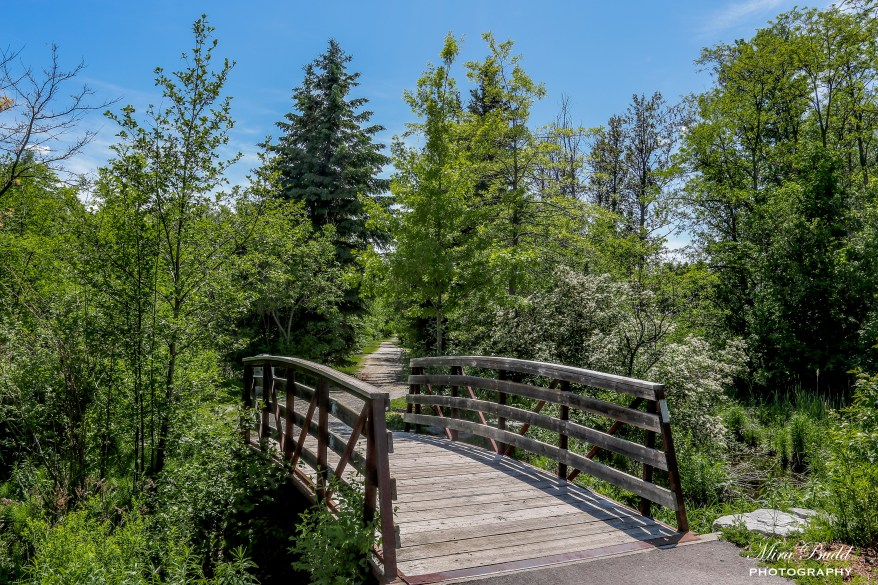 Hiking Trails Ontario, Best Hiking Trails in Ontario, International Trails Day, Bruce Trail Day, Things to do in Ontario,