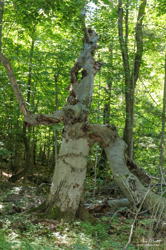 Hiking Trails Ontario, Bruce Trail Hiking Things to Do in Caledon, Ontario Hiking Trails, Beautiful Places in Ontario,