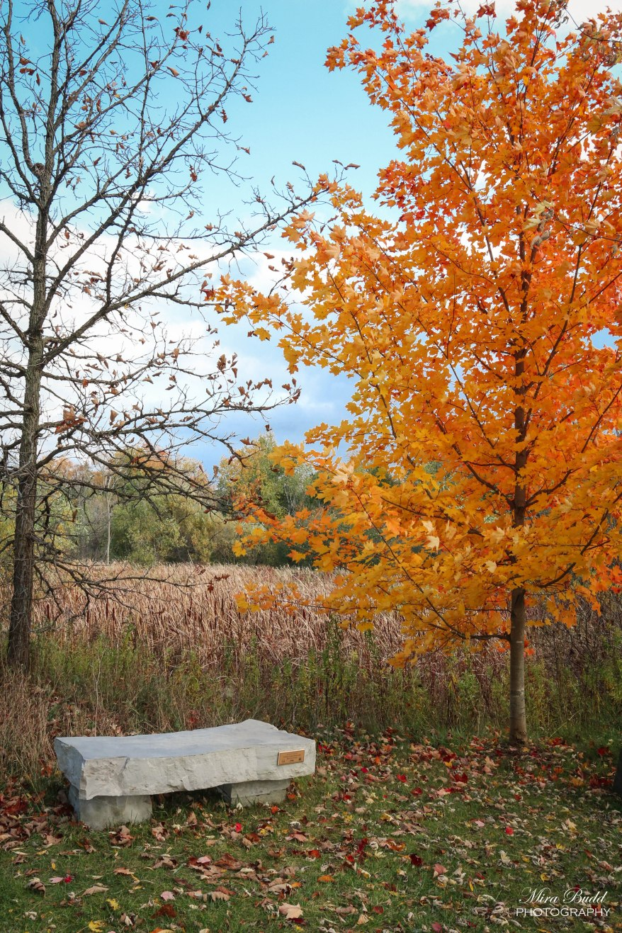 Trans Canada Trail, Things to see in Caledon, Beautiful Places in Ontario, Places to Visit in Ontario, The Great Trail, Caledon Ladies Hiking Group, Take a Hike,
