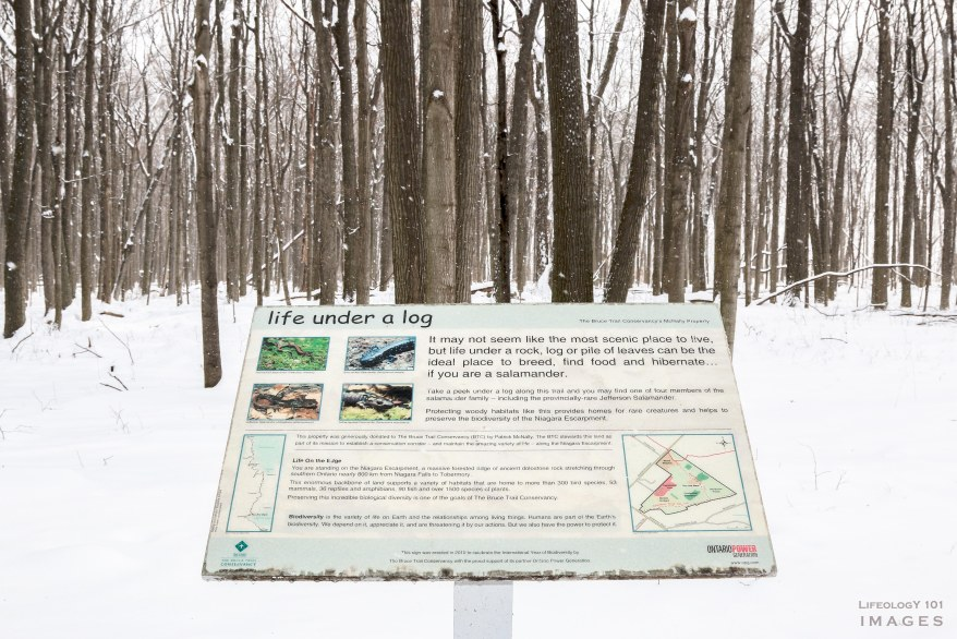 Ontario Hiking Trails, Bruce Trail, Smokey Hallow, Great Falls, Waterdown Ontario, Smokey Hallow,