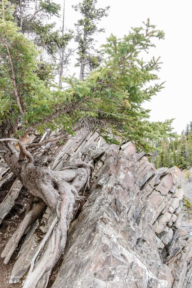 Banff Alberta, Bow Valley Parkway, Things to See in Alberta, Beautiful Places in Alberta, Places to visit in Banff, Hiking Trails Alberta, Banff Waterfalls,