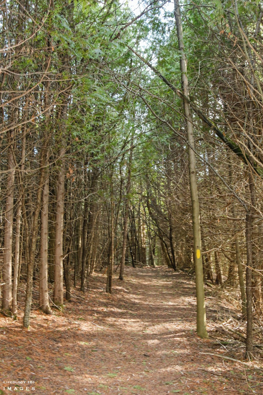 Cold Creek Conservation Area, Caledon Hiking Trails, Ontario Hiking Trails, Places to visit in Ontario,
