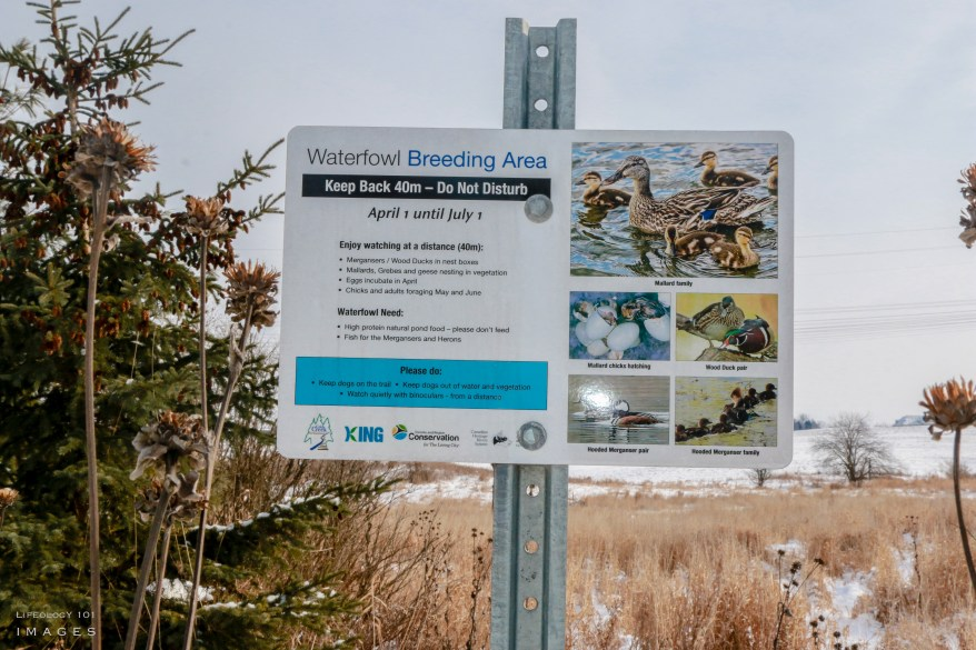 Hiking, Ontario, Trails, Caledon, Conservation, Areas,