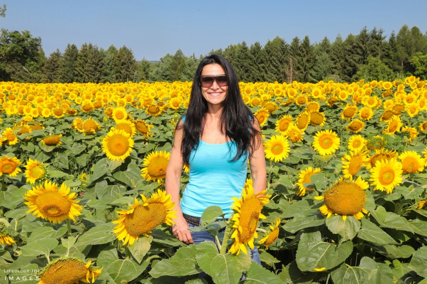 Best Sunflower Fields Toronto, Caledon Sunflower Fields, Ontario Sunflower Fields, Davis Family Farm,
