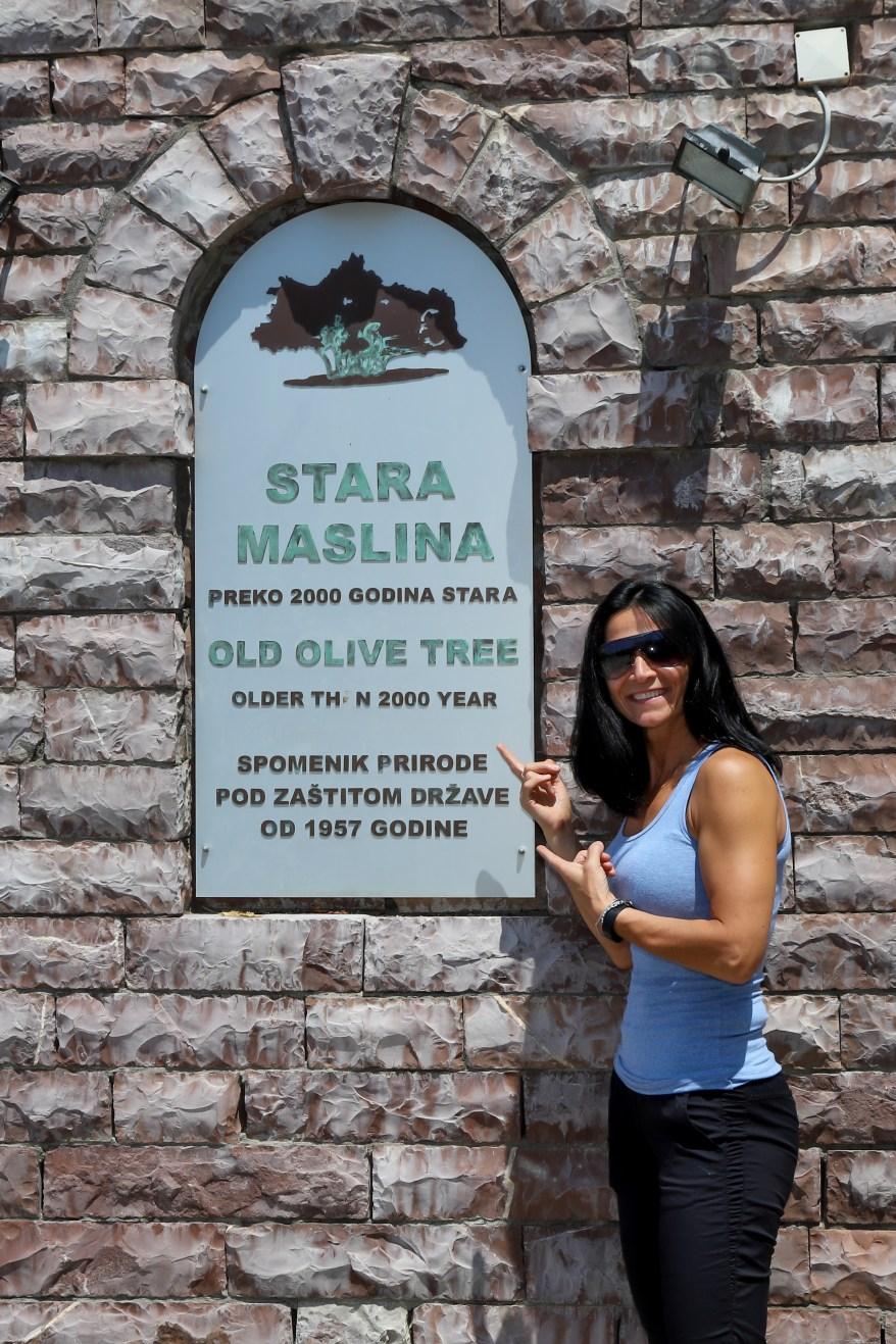 Things to See in Bar Montenegro, Stara Maslina, Old Olive Tree, Bar Montenegro,