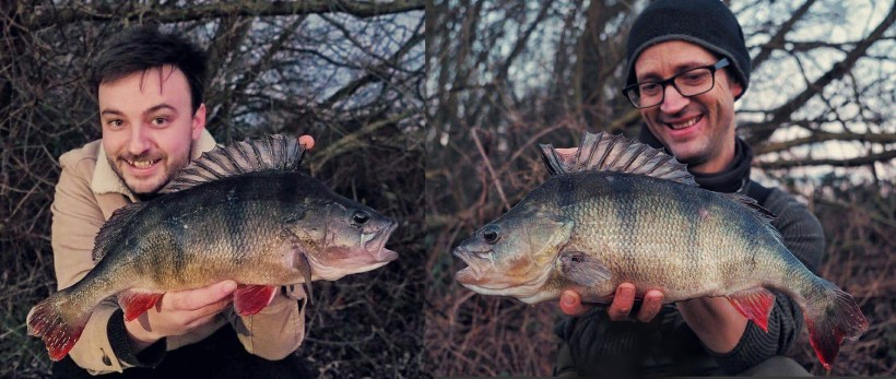 brace of big perch