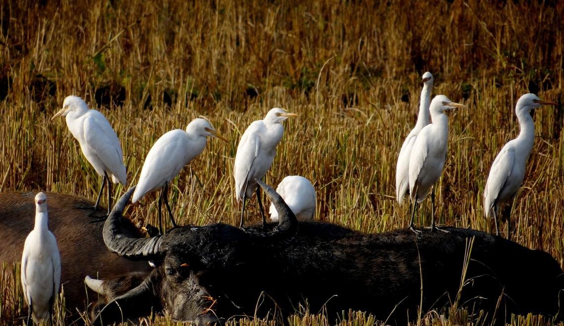 Egrets I have a few… How About You?
