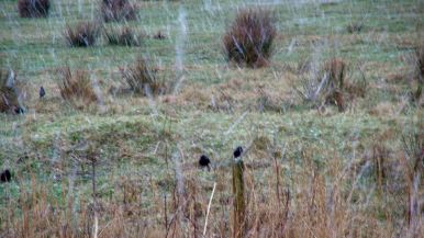 The starlings must have felt the cold