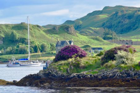 Rhododendrons on Kerrera